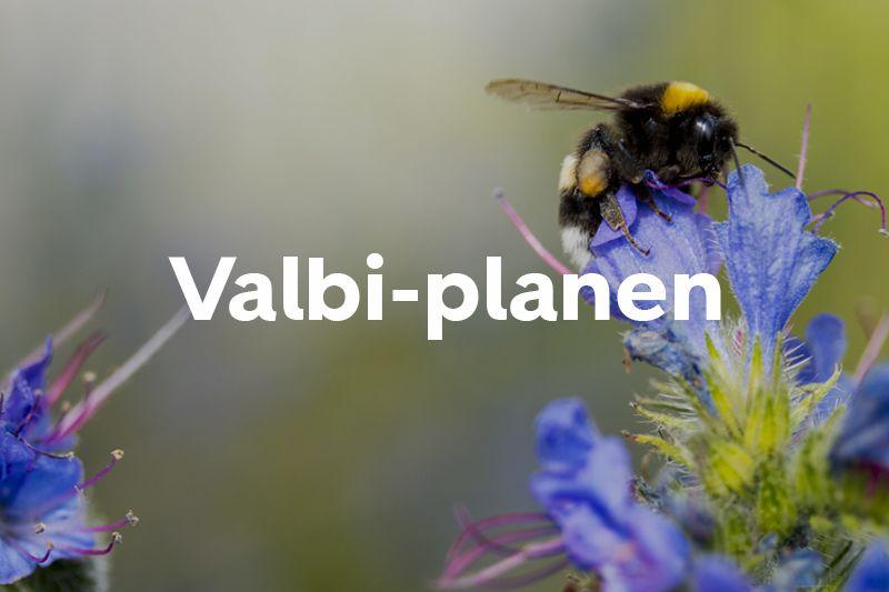 Knap forsiden Valbi-planen