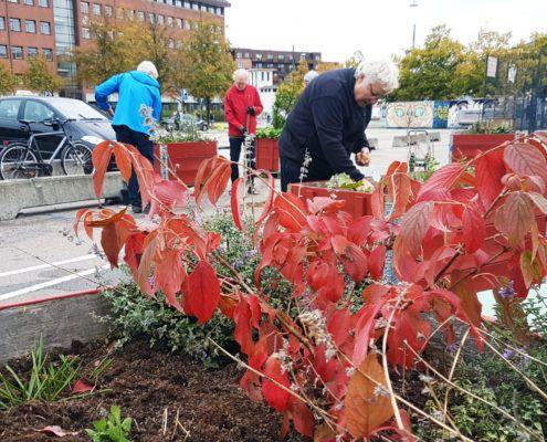 Efterårsplantedag Valby miljøgruppe 11