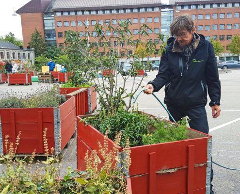 Efterårsplantedag Valby miljøgruppe 4