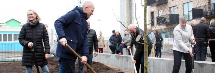 Grønttorvsparken første træer nyhed
