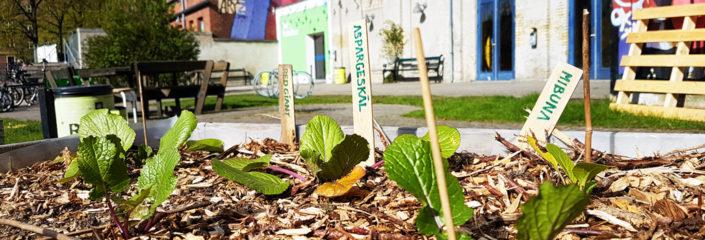 Årsplan miljøarbejdet Valby Lokaludvalg 2019 nyhed