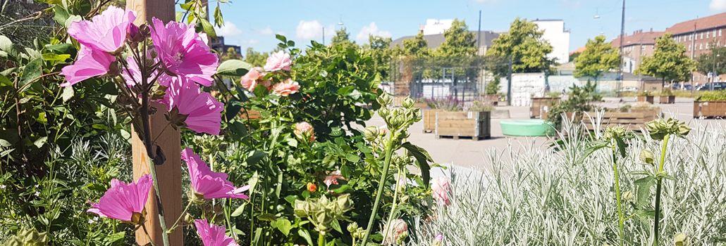 Efteråsplantekassedag Toftegårds Plads miljøgruppen nyhed
