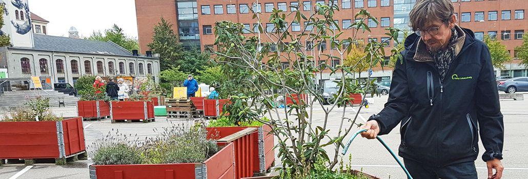 Valby miljøgruppe plantedag Toftegårds Plads nyhed