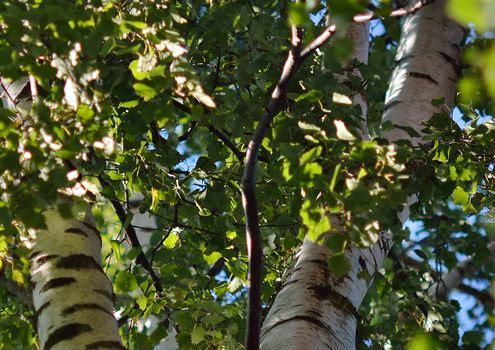 Vigerslevparken træer januar 2020 nyhed