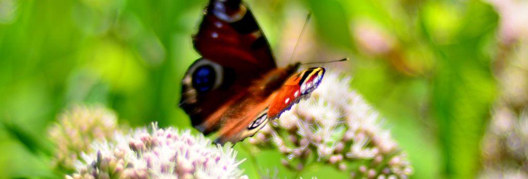 Biodiversitetspulje nyhed