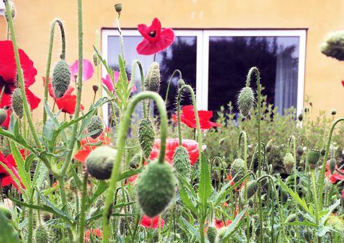 Biodiversitetspulje runde 2 nyhed